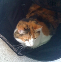 Jackie in a hamper