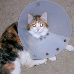 From her spaying in 2008.
