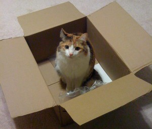 Jackie, sitting in our PS3 shipping box.