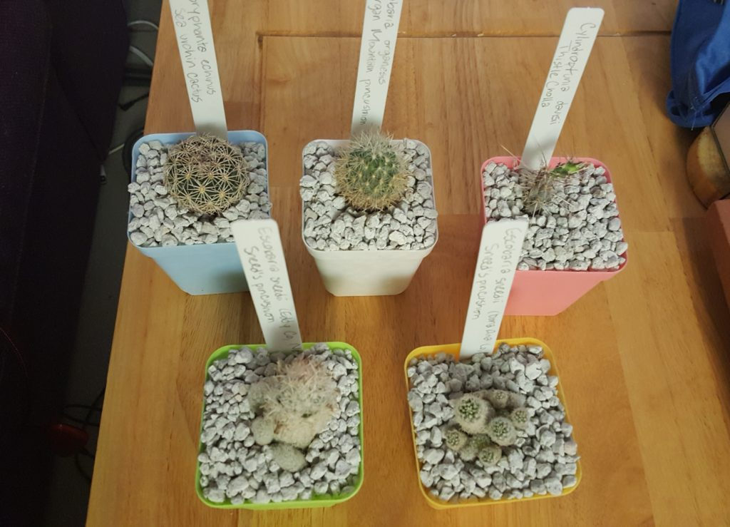 Summer 2017 cactus garden additions.