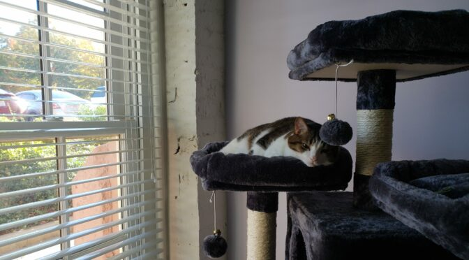 Greg-the-cat, drowsing on their cat tree.